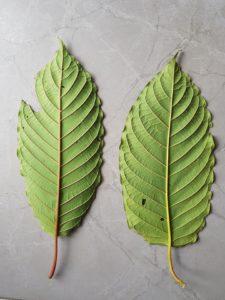 red vein - green vein